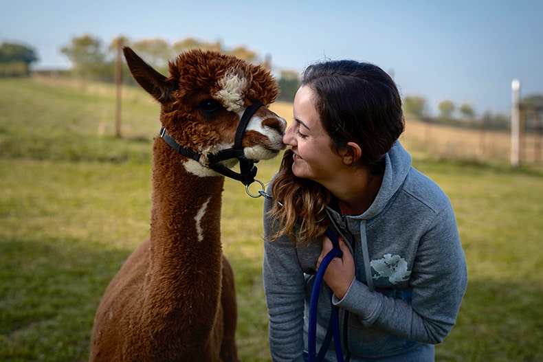 Alpaca di Marano - Allevamento Alpaca - Gloria Merli